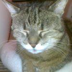 Katze Jenny