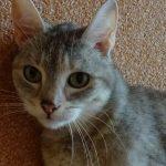 Katze Sarah