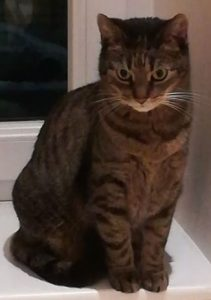 Katze Marli